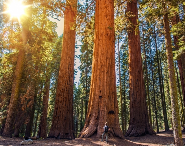 Sequoia National Park in 4K