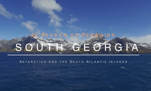 South Georgia - In Search of Penguins