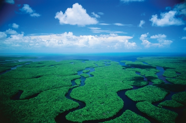 Meet the Residents of Everglades National Park | America's National Parks