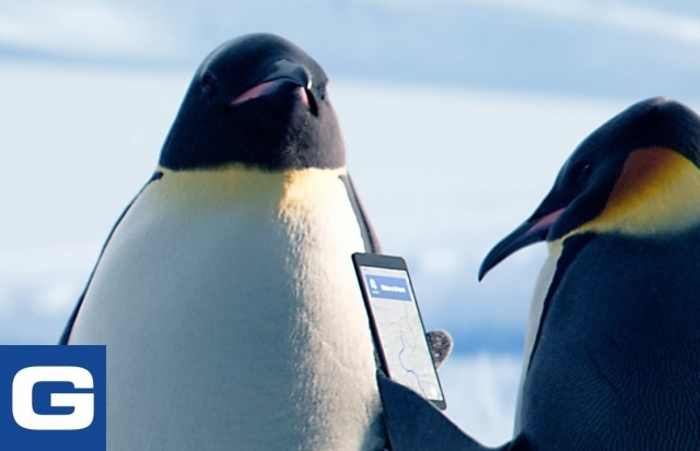 The Great Penguin Migration - GEICO