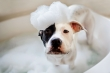 Funny Dogs Who Don't Want To Take A Bath - Try Not To Laugh