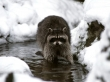 5 Animals That Do Winter Better Than You