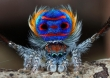 Most AMAZING Spiders In The World!